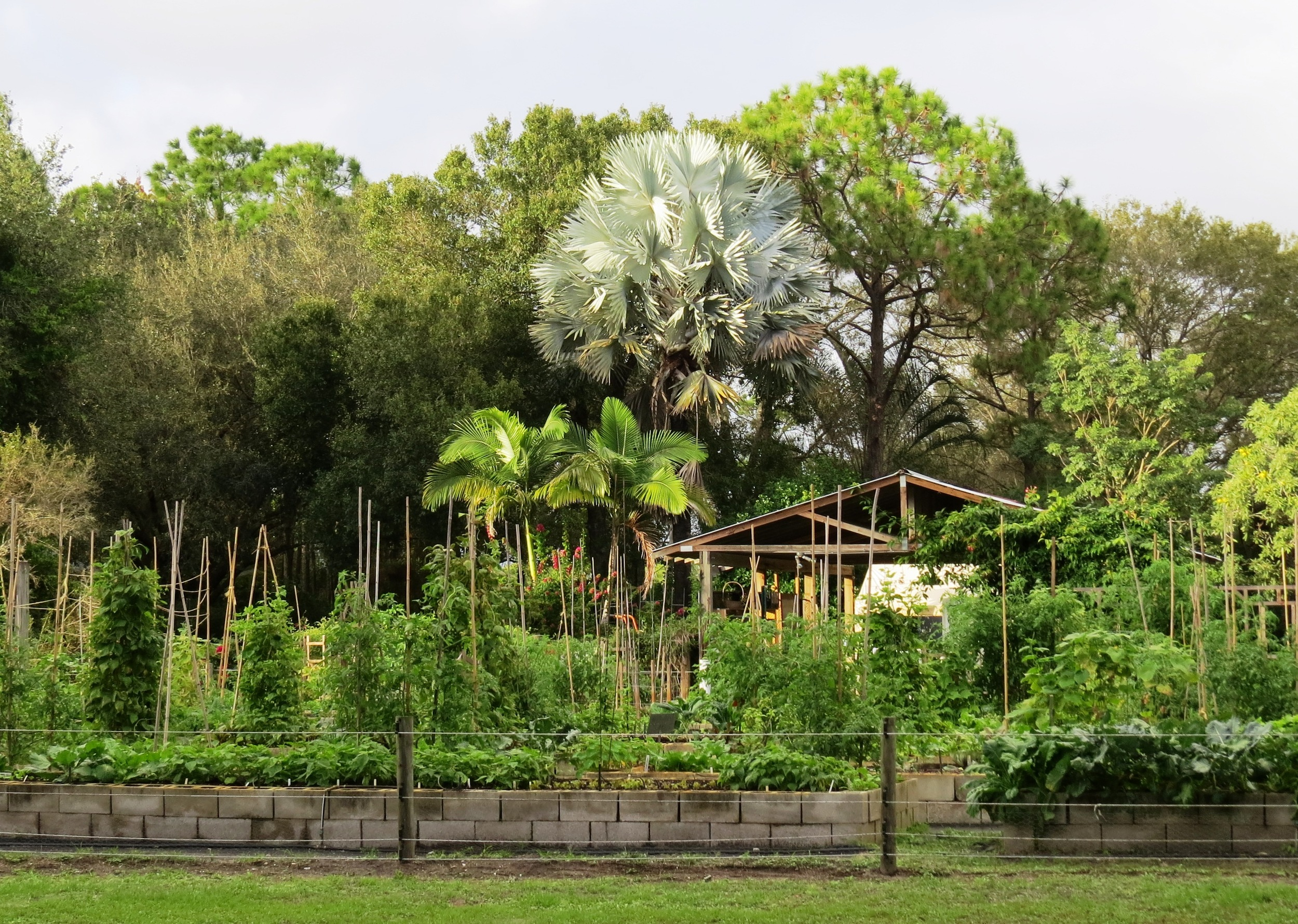 Garden Two in Season Six, late November of 2015