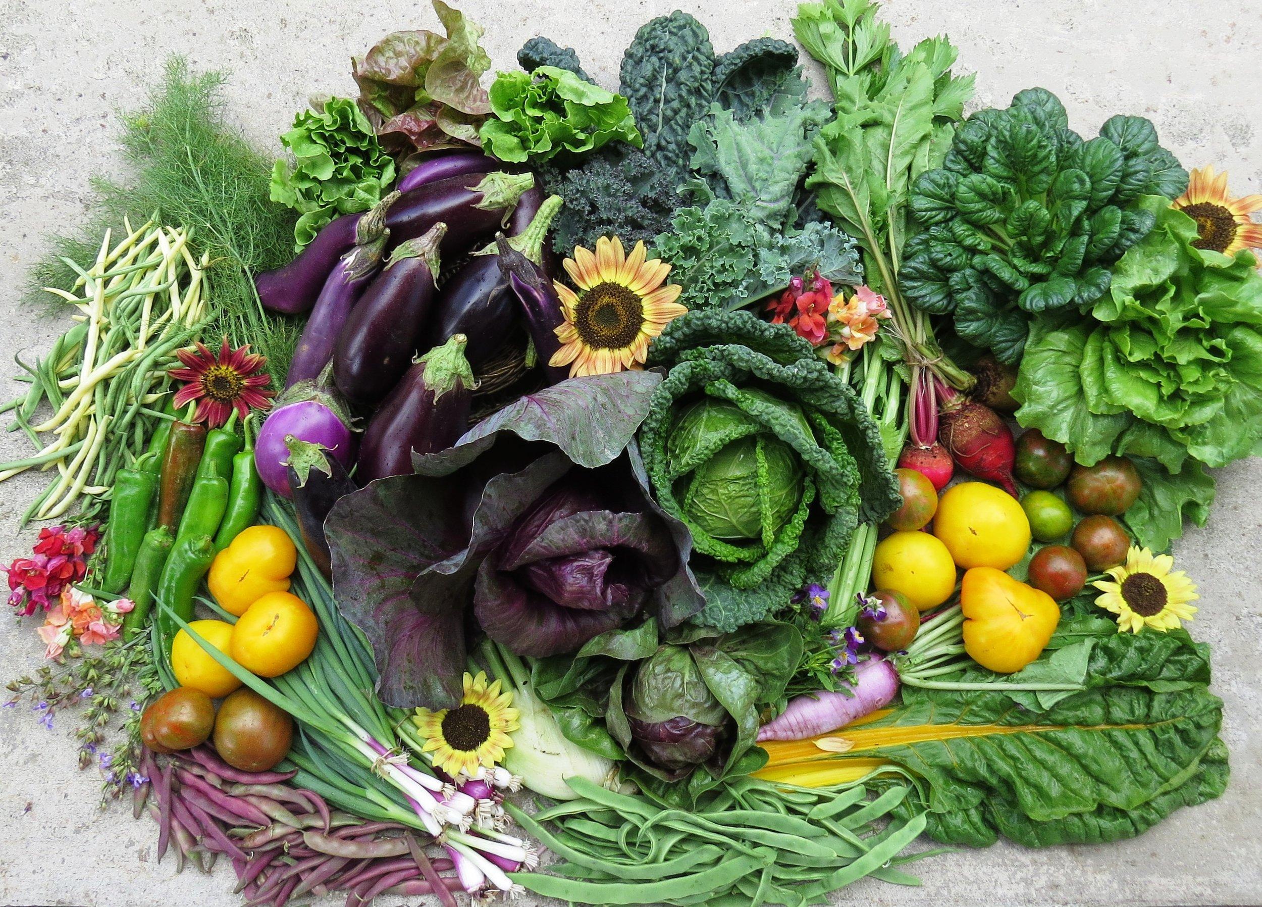 Certified Organic Produce - Here is some description text. Ut lacus vitae velit pulvinar fermentum. Praesent in nisl felis. Nunc commodo tellus risus, non commodo risus imperdiet.Learn more ➝