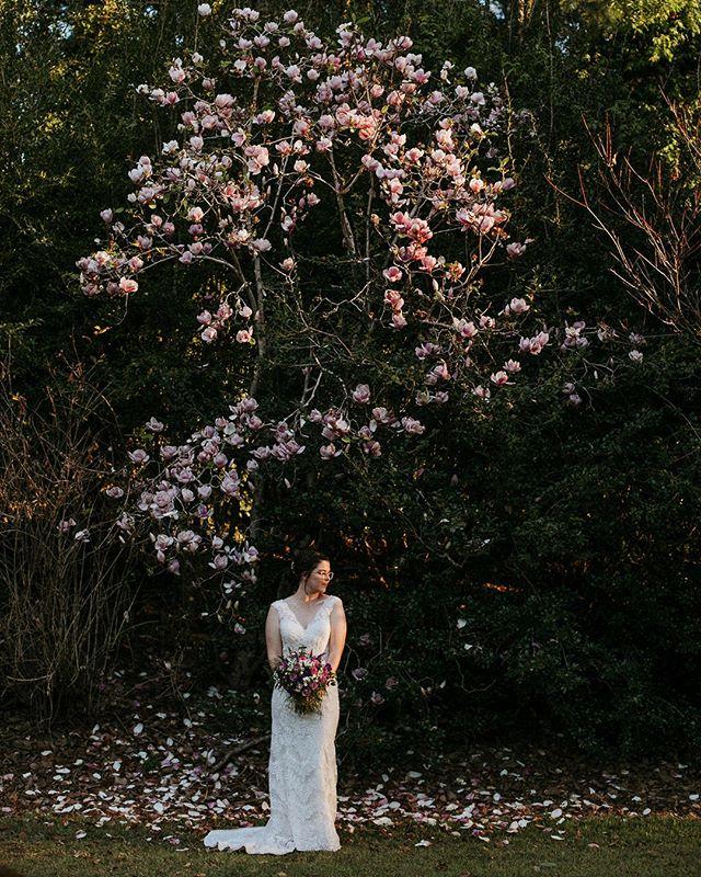 The magnolias at @montvaleweddings were in full bloom for Danika and Brady's wedding....their property a magical wonderland of hidden paths to explore 🥰⠀⠀⠀⠀⠀⠀⠀⠀⠀ ⠀⠀⠀⠀⠀⠀⠀⠀⠀ 📸 @amyhiggphotography ⠀⠀⠀⠀⠀⠀⠀⠀⠀ ⠀⠀⠀⠀⠀⠀⠀⠀⠀ Sent via @planoly #planoly #weddingstyle #wedding #bride #groom #celebrant #weddingcelebrant ⠀⠀⠀⠀⠀⠀⠀⠀⠀ #coastalweddings #justmarried #marriagecelebrant #ido #isaidyes #engaged #engagement #marriage #love #thebridestree #sunshinecoastcelebrant #hinterlandwedding #sunshinecoasthinterland #malenywedding #sunshinecoastwedding #gardenwedding