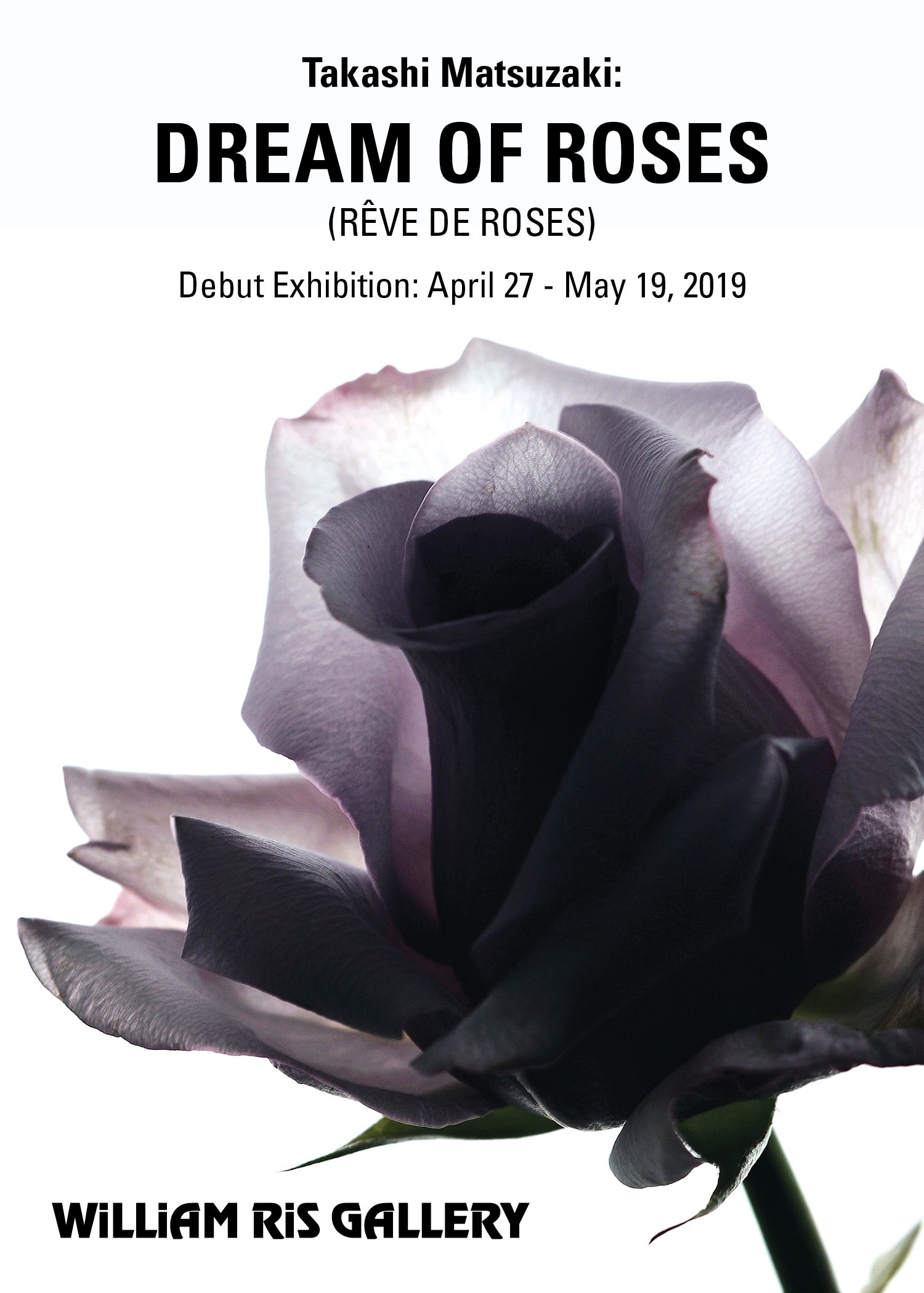WRG Dream of Roses 5x7.jpg