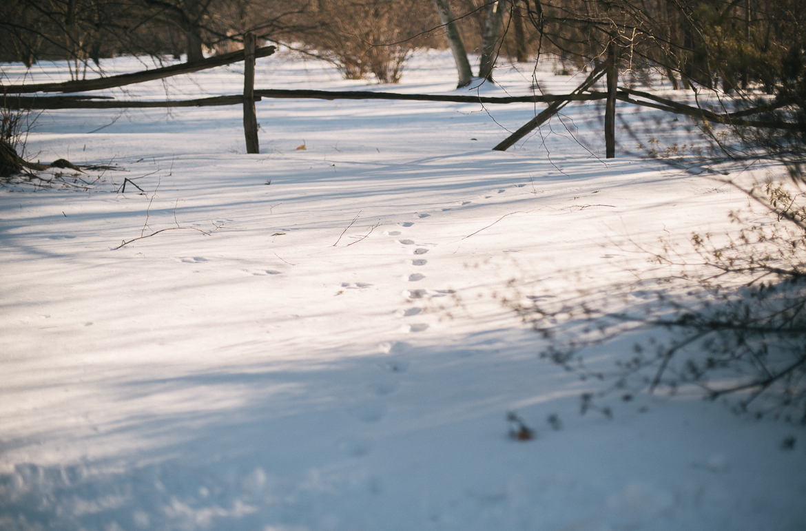 the-planting-fields-oyster-bay-ny-winter-snow-travel-long-island-photographer-0003
