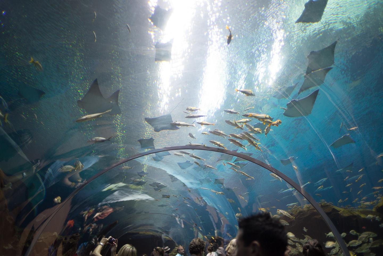 atlanta-trip-georgia-travel-photography-georgia-aquarium-photographer-0012