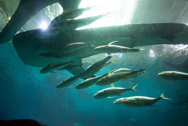 atlanta-trip-georgia-travel-photography-georgia-aquarium-photographer-0026