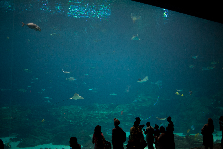 atlanta-trip-georgia-travel-photography-georgia-aquarium-photographer-0027