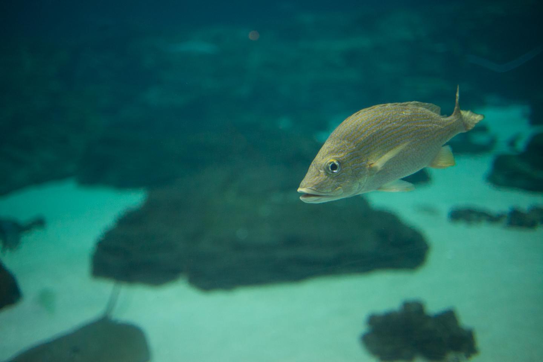 atlanta-trip-georgia-travel-photography-georgia-aquarium-photographer-0028