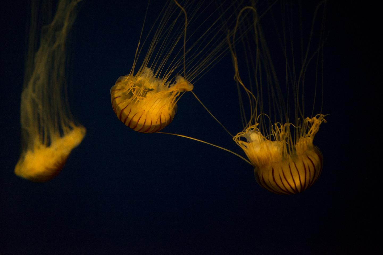 atlanta-trip-georgia-travel-photography-georgia-aquarium-photographer-0051