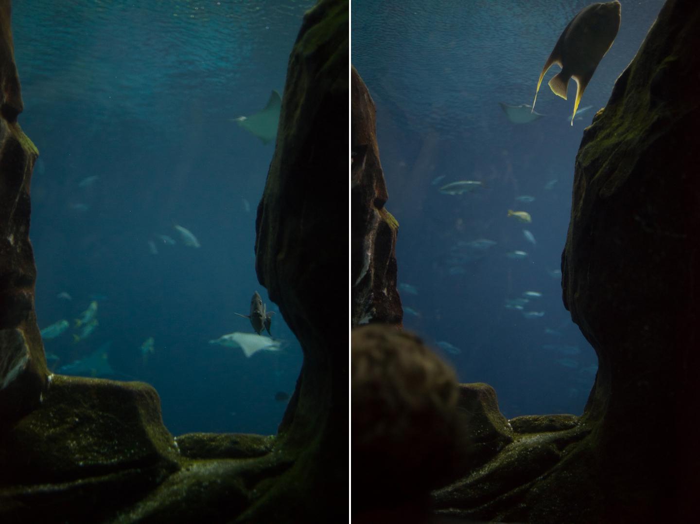 atlanta-trip-georgia-travel-photography-georgia-aquarium-photographer-Collage 3