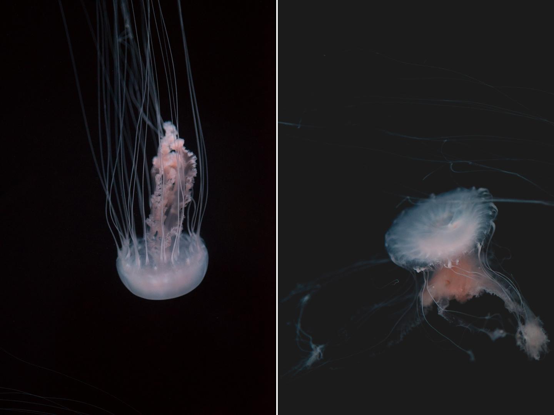 atlanta-trip-georgia-travel-photography-georgia-aquarium-photographer-Collage 7
