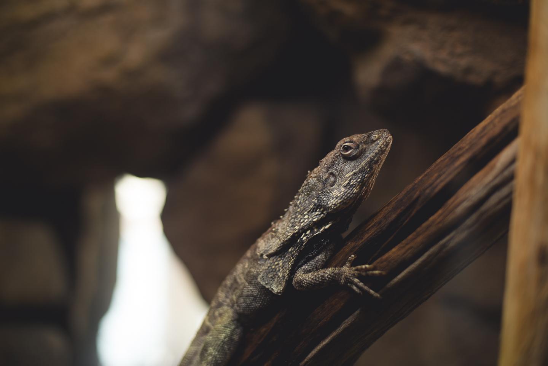 baltimore-national-aquarium-travel-photography-travel-photographer-0022