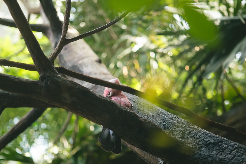 baltimore-national-aquarium-travel-photography-travel-photographer-0028