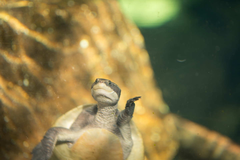 baltimore-national-aquarium-travel-photography-travel-photographer-0029