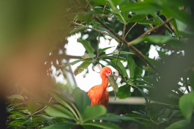 baltimore-national-aquarium-travel-photography-travel-photographer-0031