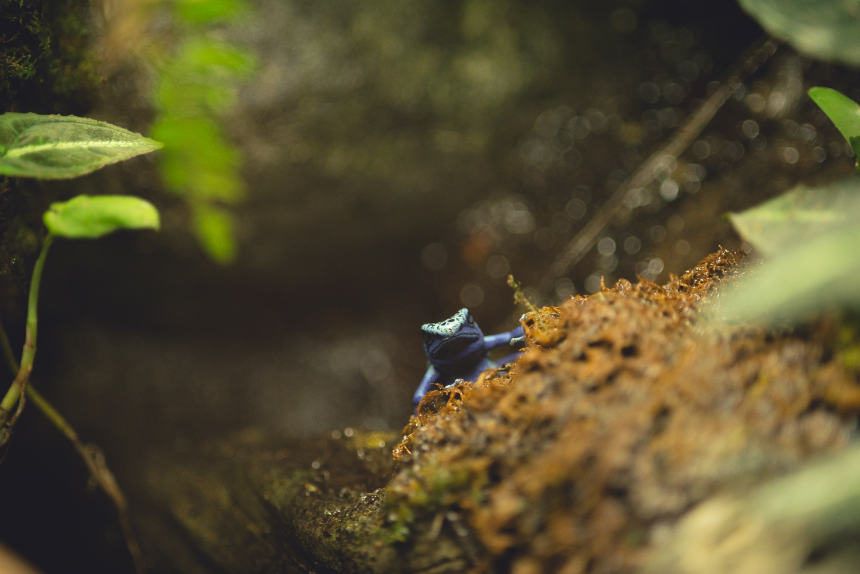 baltimore-national-aquarium-travel-photography-travel-photographer-0034