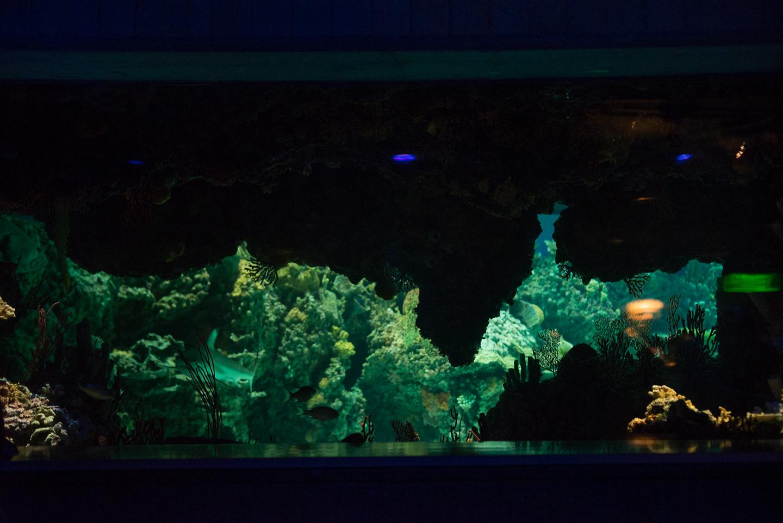 baltimore-national-aquarium-travel-photography-travel-photographer-0038