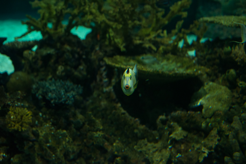 baltimore-national-aquarium-travel-photography-travel-photographer-0039