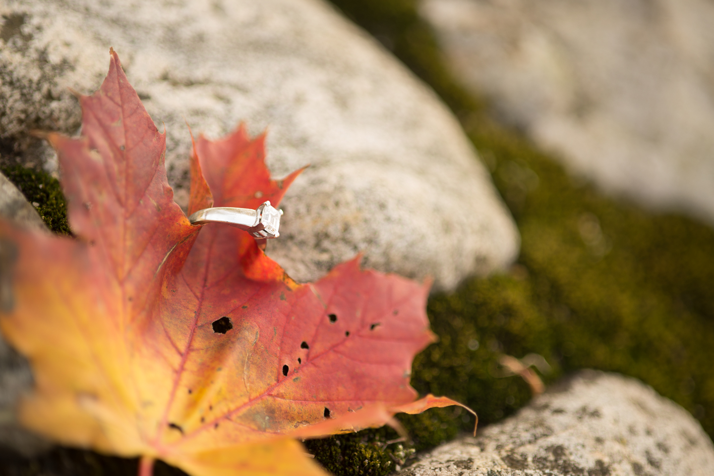dominique-rich-fall-engagement-session-long-island-photographer-0027