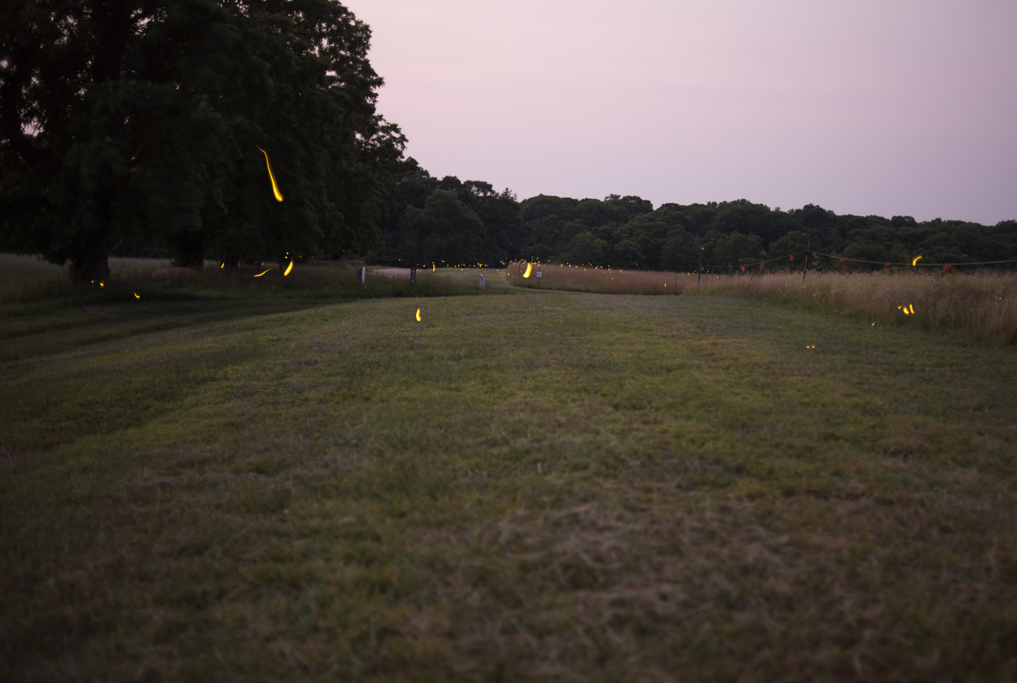 fireflies-caumet-park-long-island-long-exposure-0014