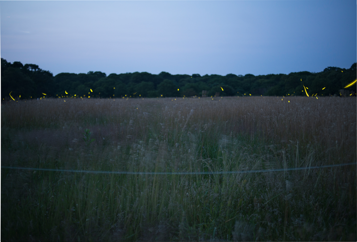 fireflies-caumet-park-long-island-long-exposure-0015