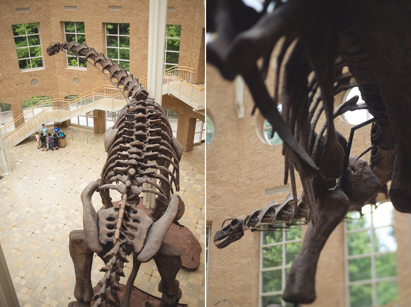 atlanta-ga-fernbank-museum-of-natural-history-travel-photography-lensbaby-edge-80-Collage 1