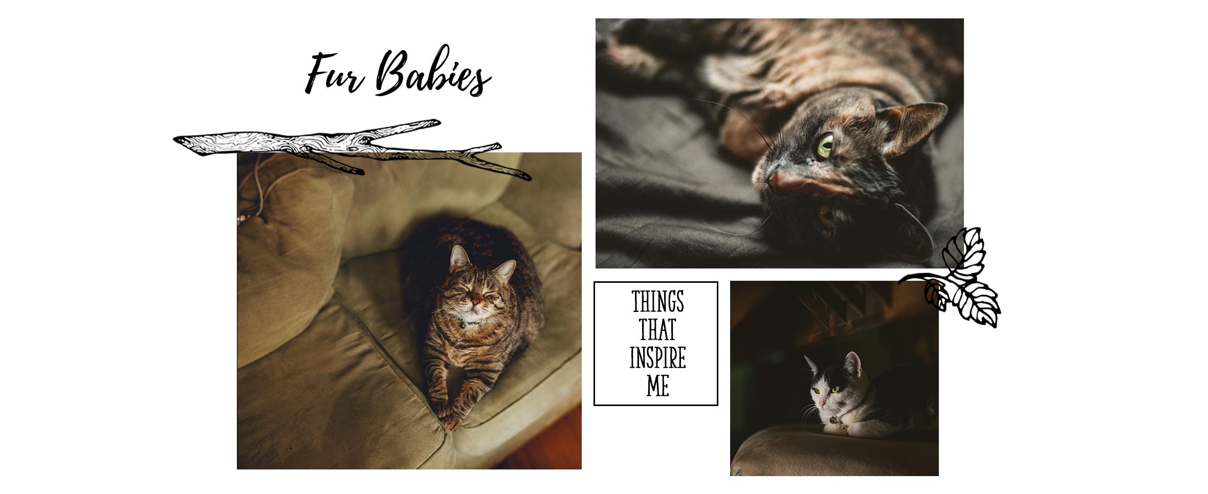 Fur-Babies-slide.png