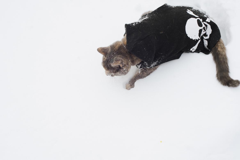 snowpocalypse-2015-cats-snow-long-island-photographer-0006.jpg