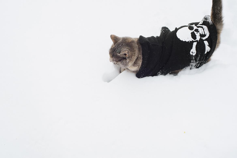 snowpocalypse-2015-cats-snow-long-island-photographer-0007.jpg