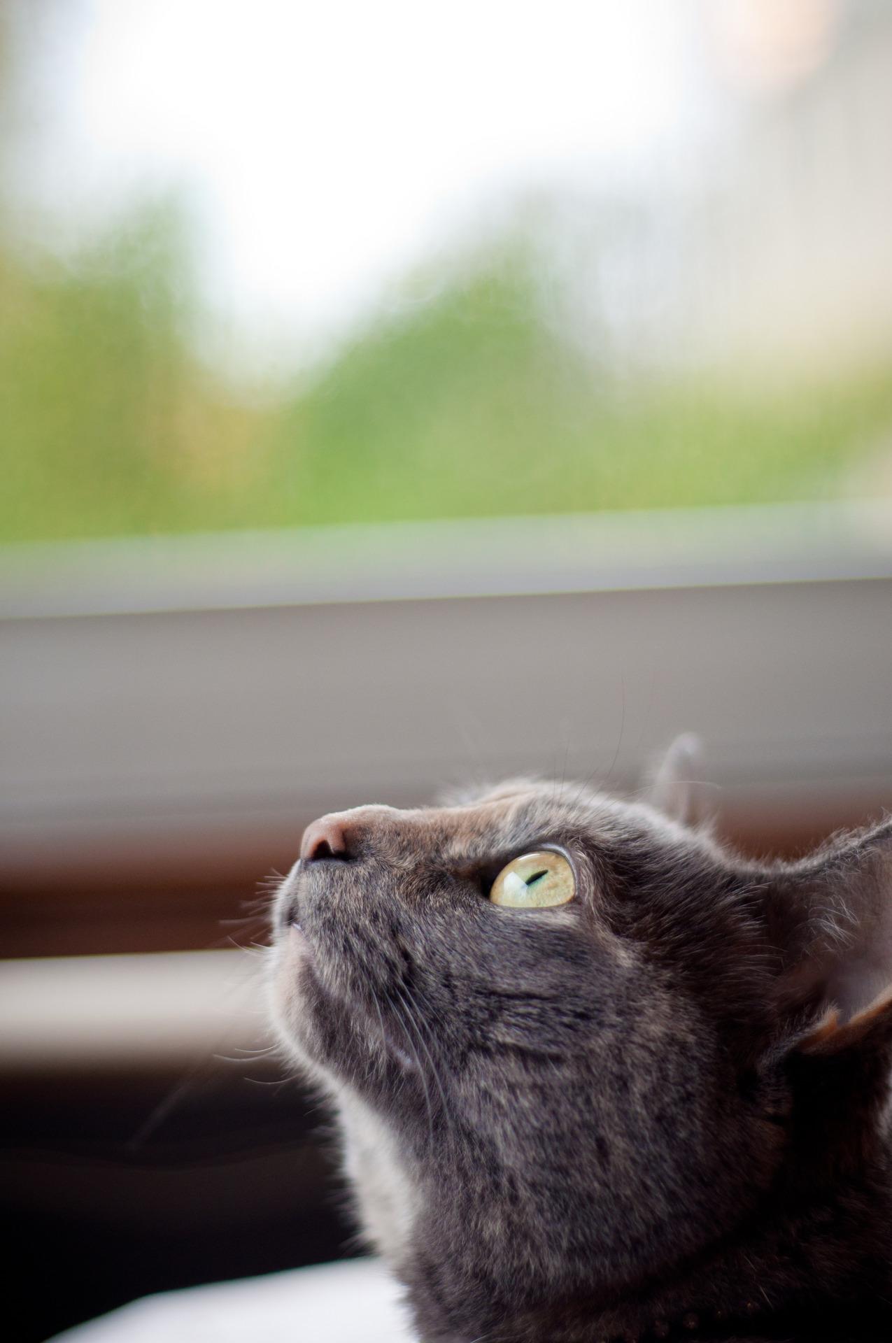 Annie checking out the Hurricane
