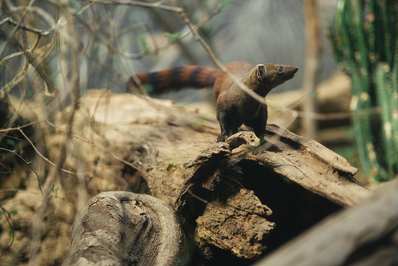 bronx-zoo-nyc-animal-travel-ny-wildlife-photography-0004.jpg