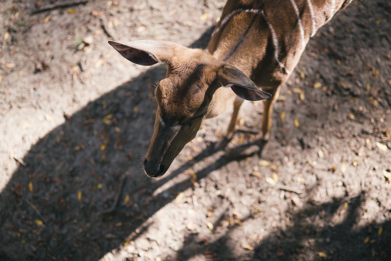 bronx-zoo-nyc-animal-travel-ny-wildlife-photography-0018.jpg