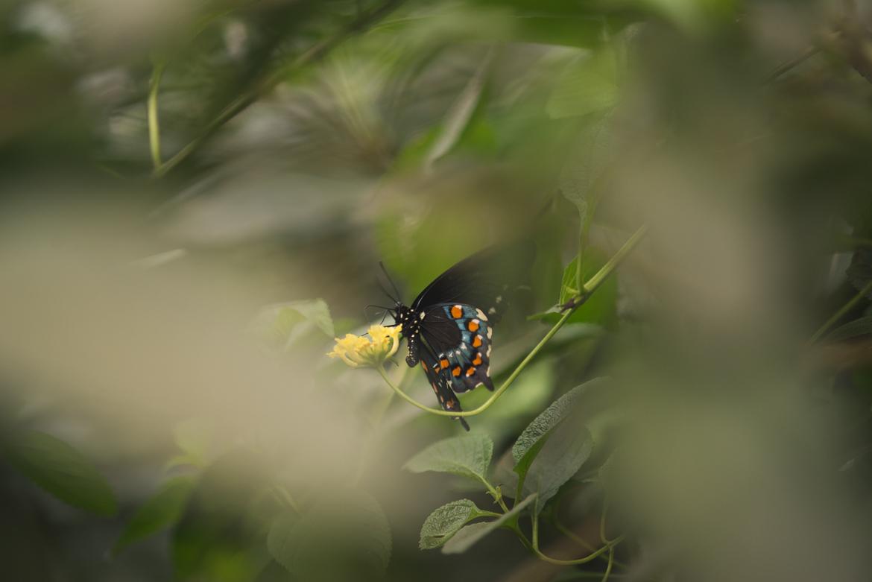 bronx-zoo-nyc-animal-travel-ny-wildlife-photography-butterfly-0030.jpg