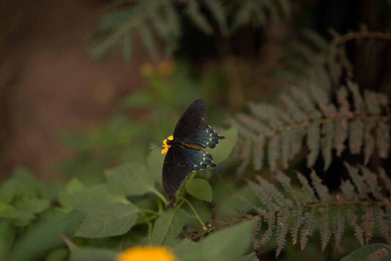 bronx-zoo-nyc-animal-travel-ny-wildlife-photography-butterfly-house-0029.jpg