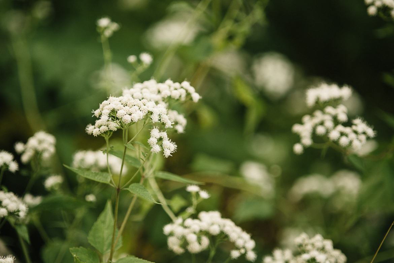bronx-zoo-nyc-animal-travel-ny-wildlife-photography-flower-0021.jpg