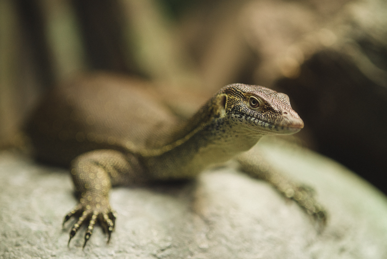 bronx-zoo-nyc-animal-travel-ny-wildlife-photography-lizard-00091.jpg