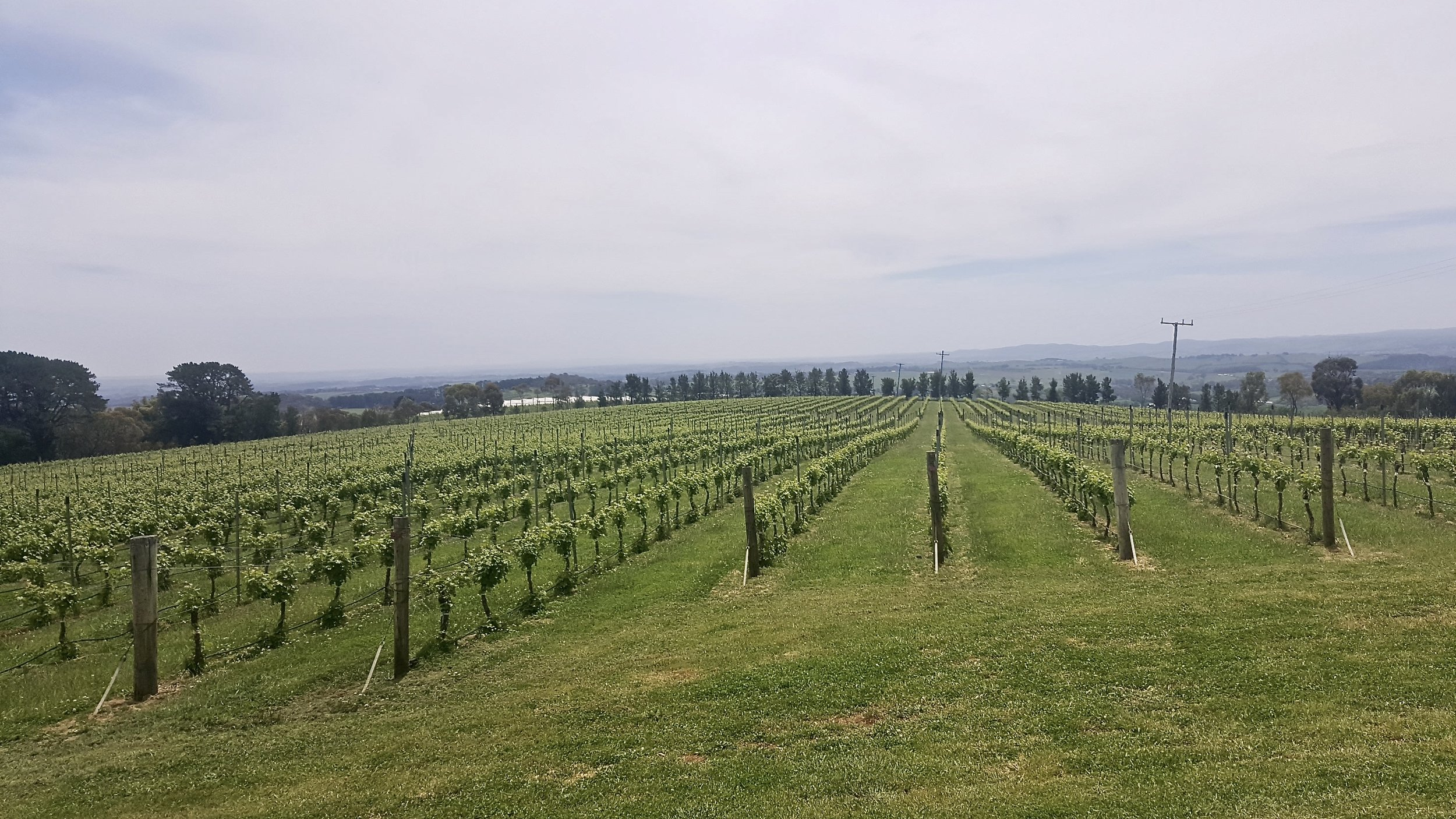 De Salis vineyard, Orange, Central New South Wales, Australia