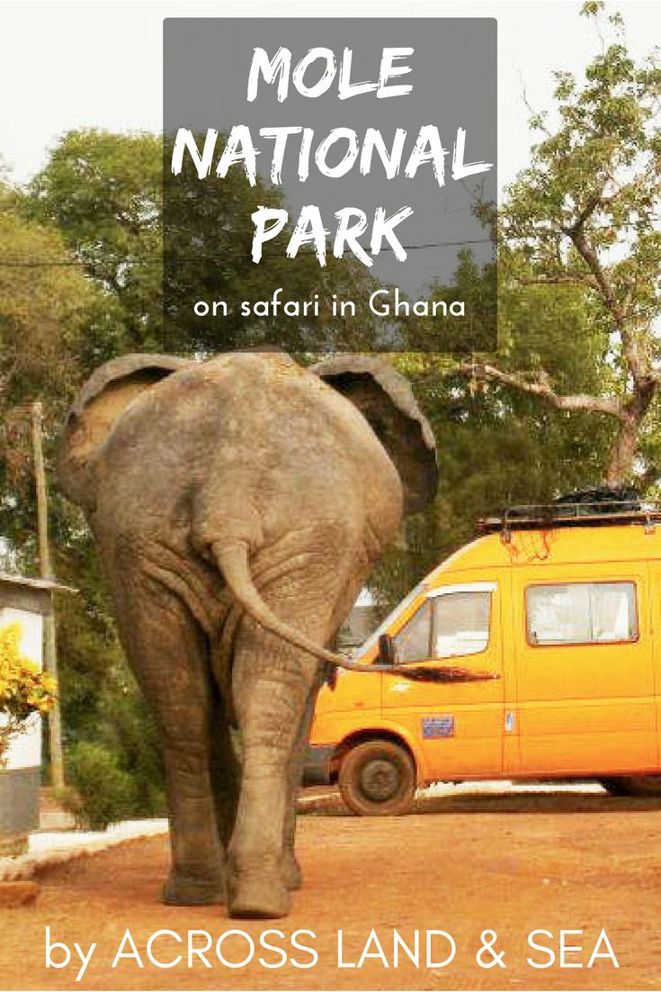 On safari in Ghana's Mole National Park, Elephant, Mole Motel, Africa