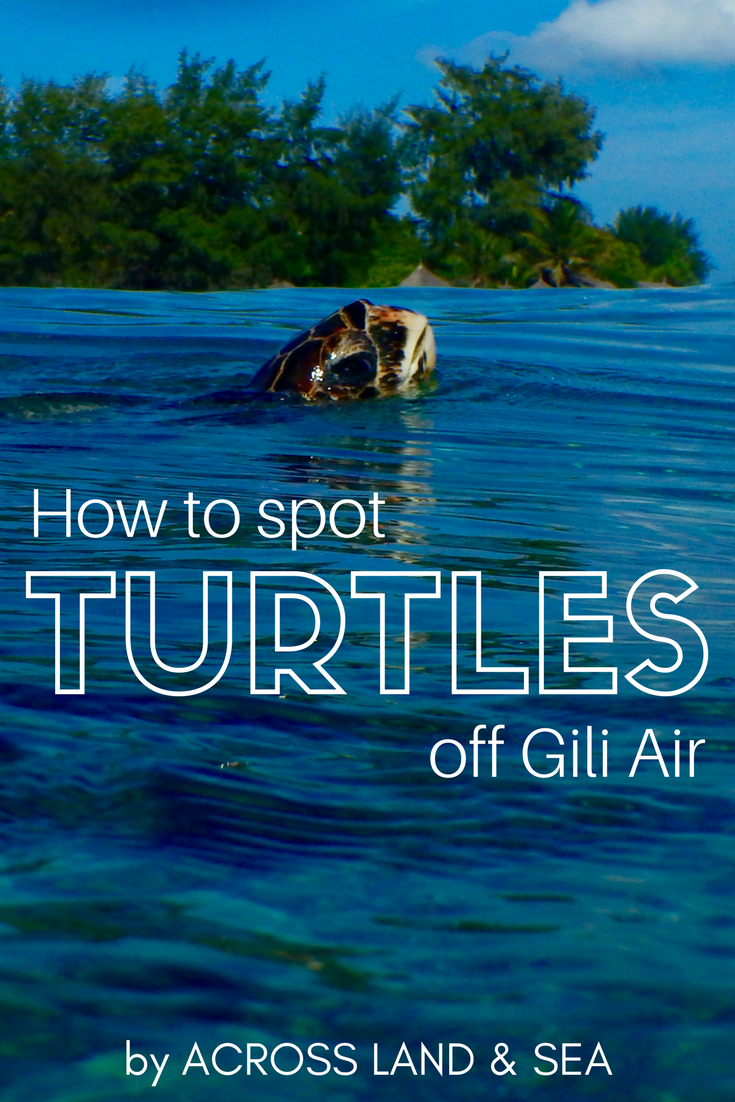 How to find turtles off Gili Air