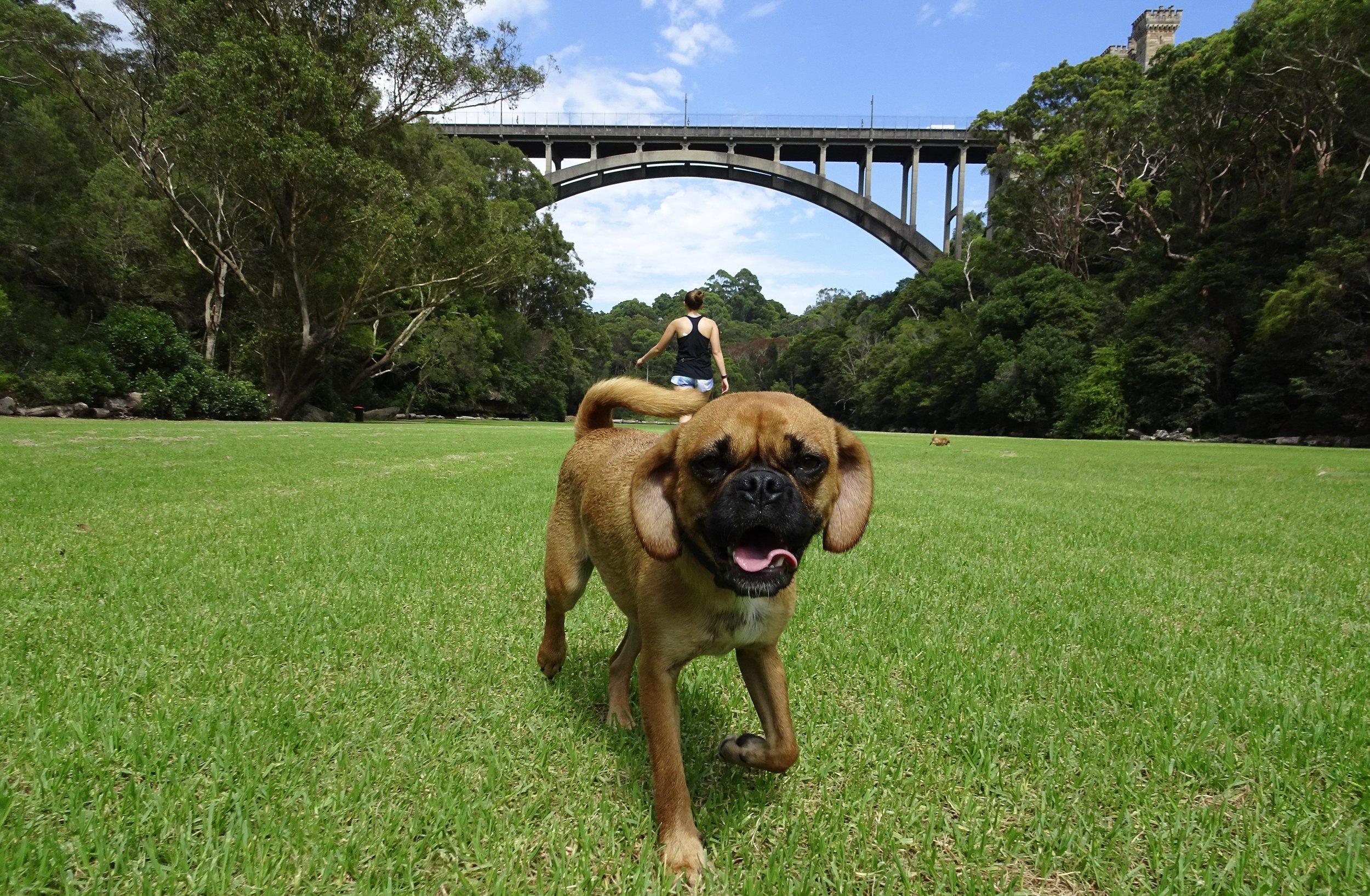 Tunks Park, Northbridge, Sydney, Australia
