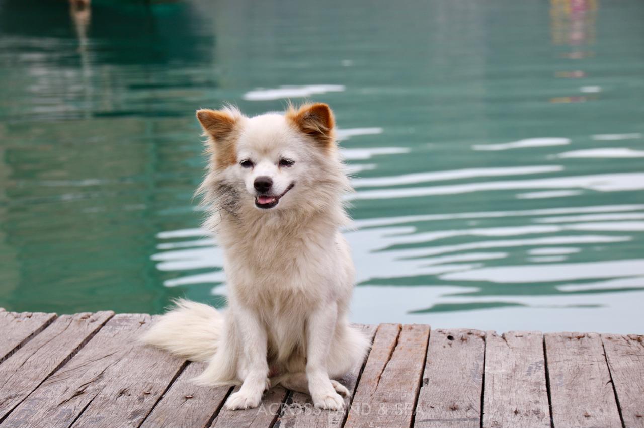 Bai Tu Long Dog.jpg
