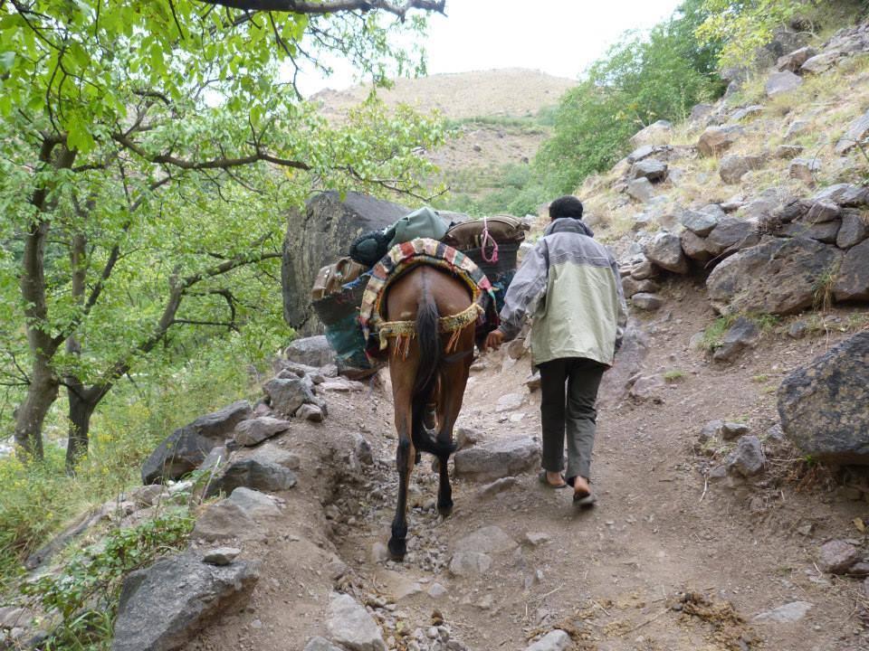 Horse, Chefchouen, Morocco @acrosslandsea
