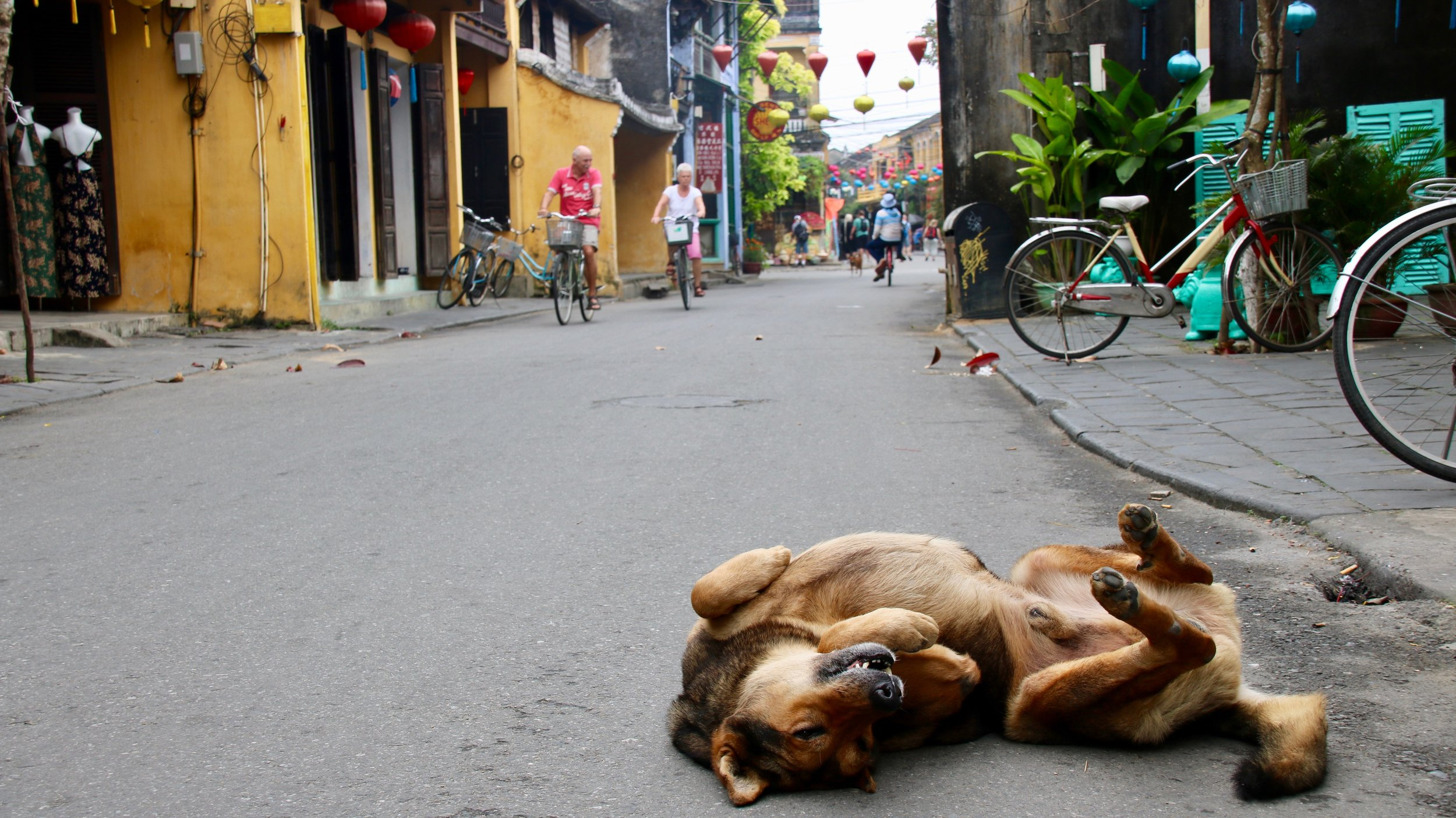 Dogs of Vietnam: trading man's best friend for meat