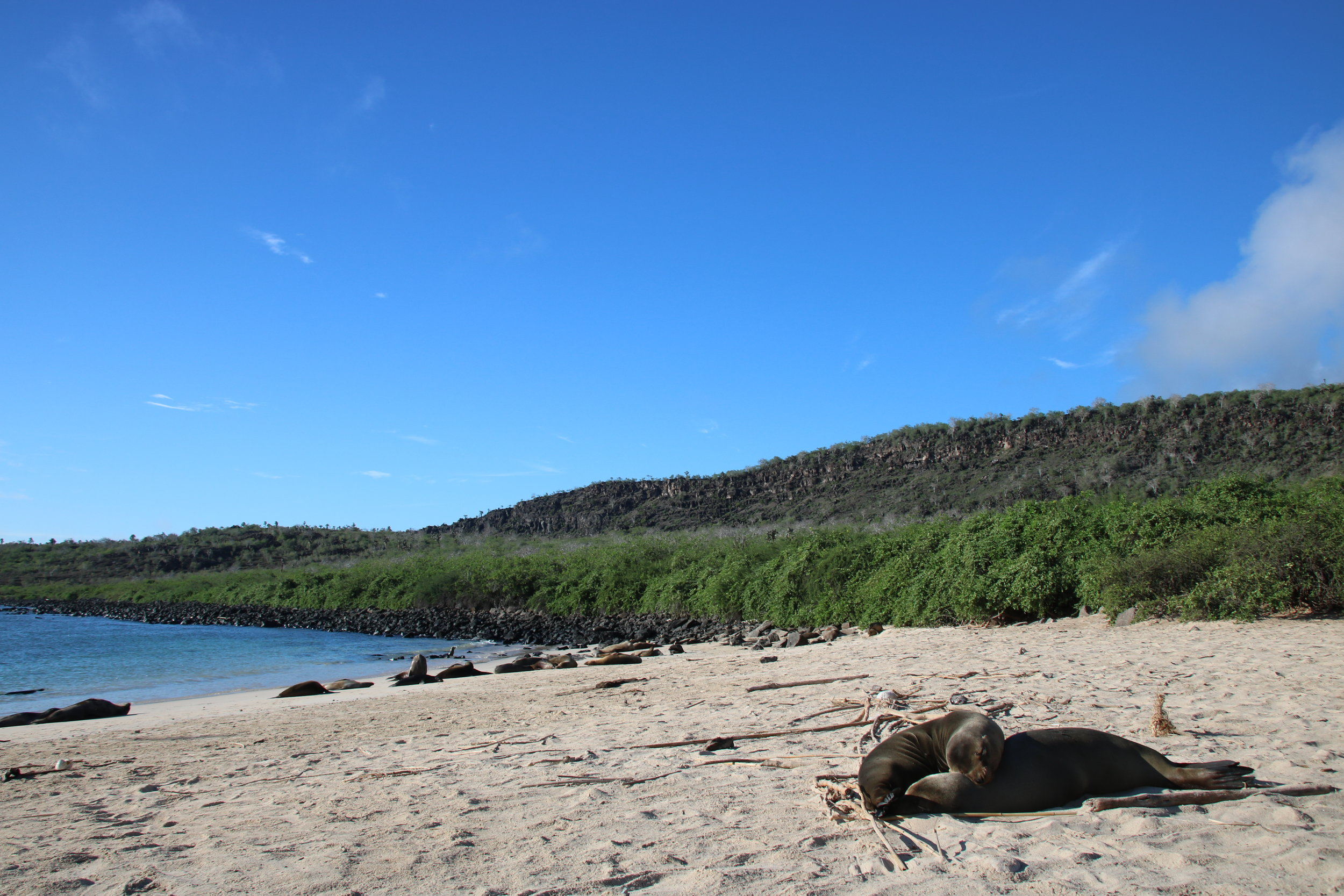 Sea Lion. 15 things to know before travelling Galapagos