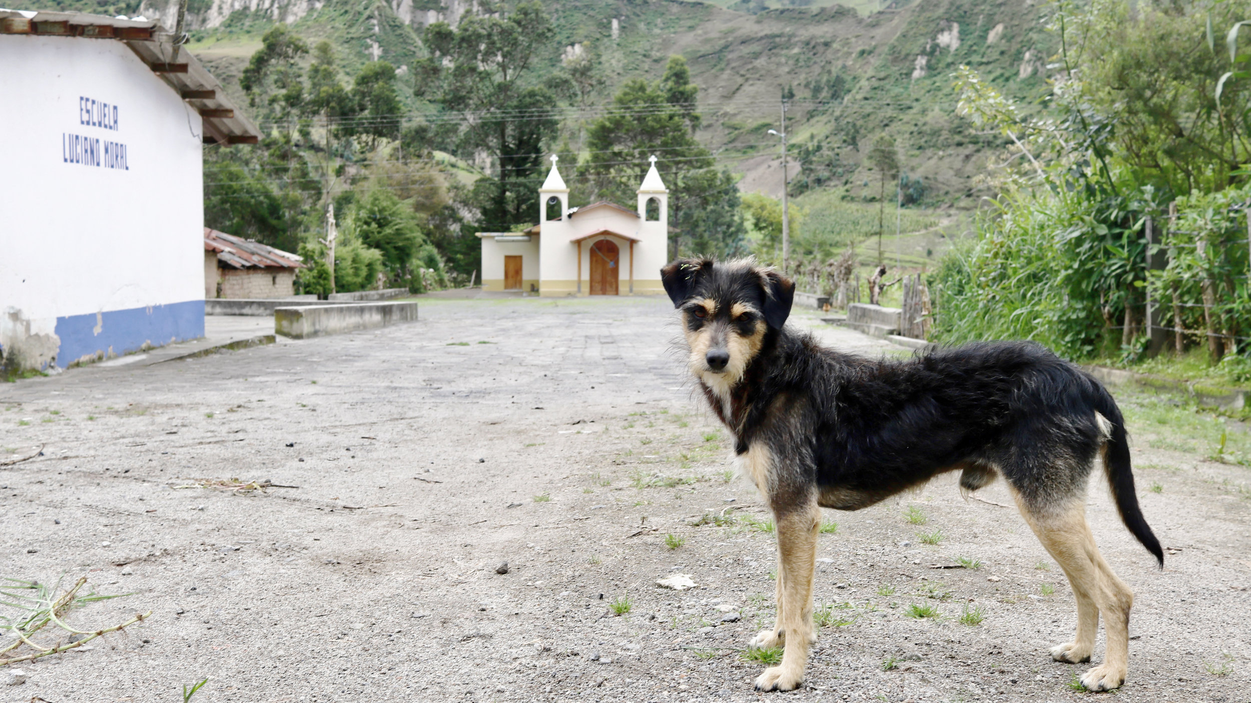Dog on the Quilotoa Loop, Walking Directions. Across Land & Sea