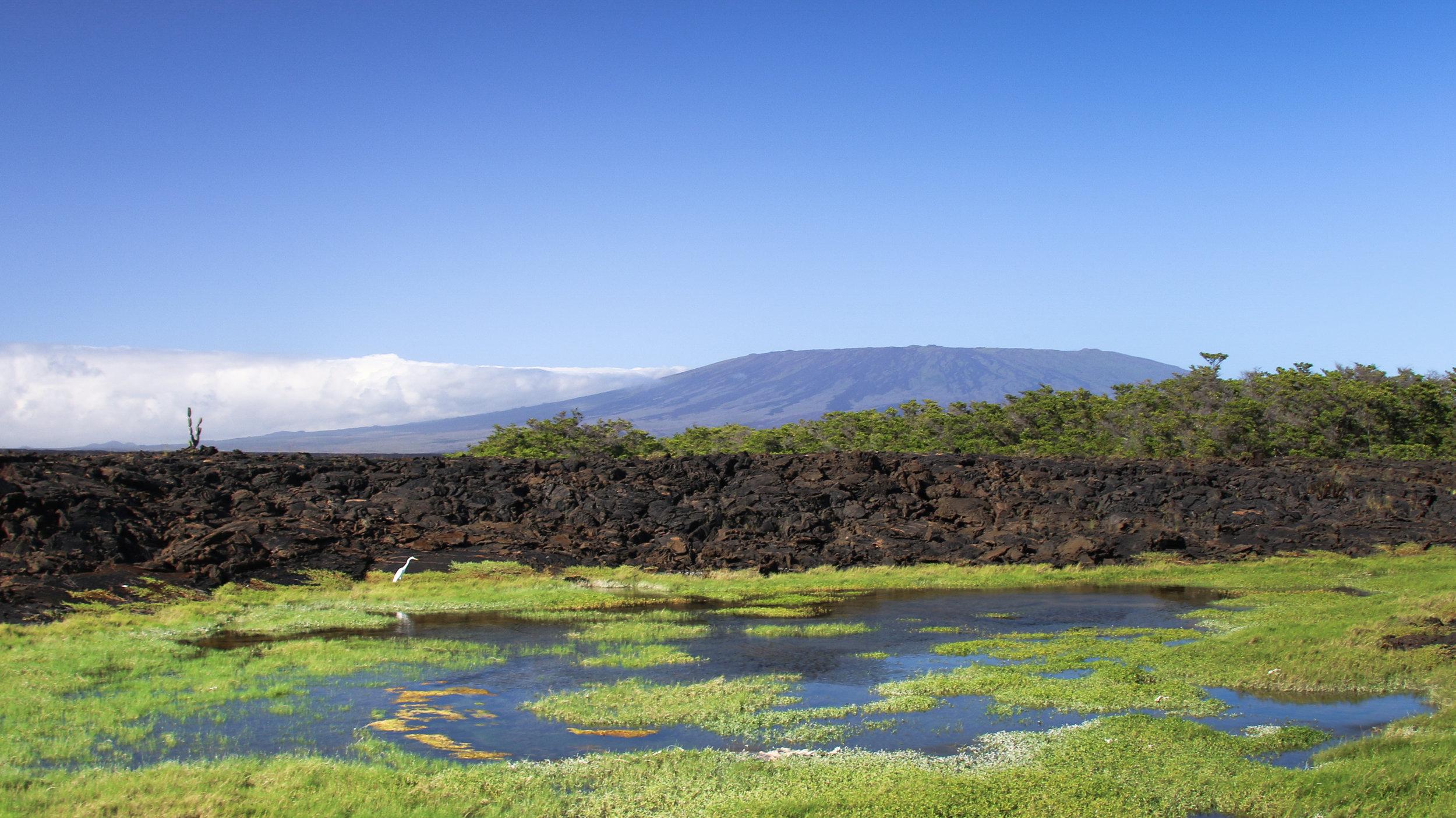 Isabela Island, Galápagos, Across Land & Sea