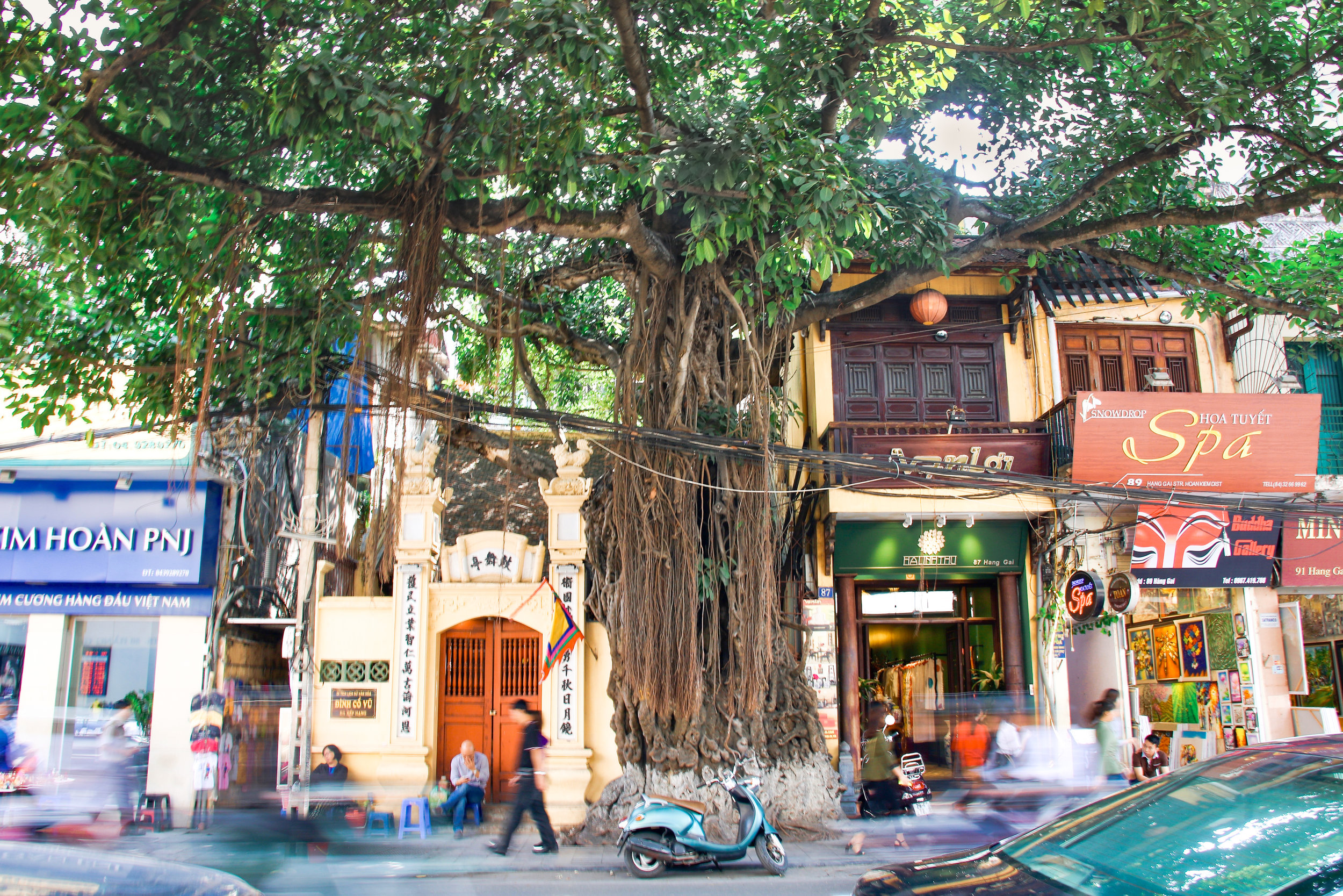 Big tree in Hanoi, Vietnam. Across Land & Sea