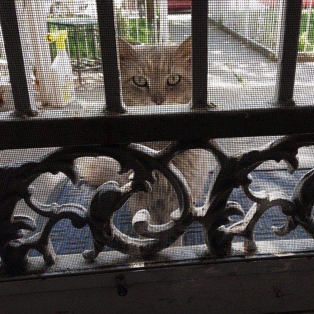 The feral kitty I take care of has a subtle way of letting me know he wants breakfast.