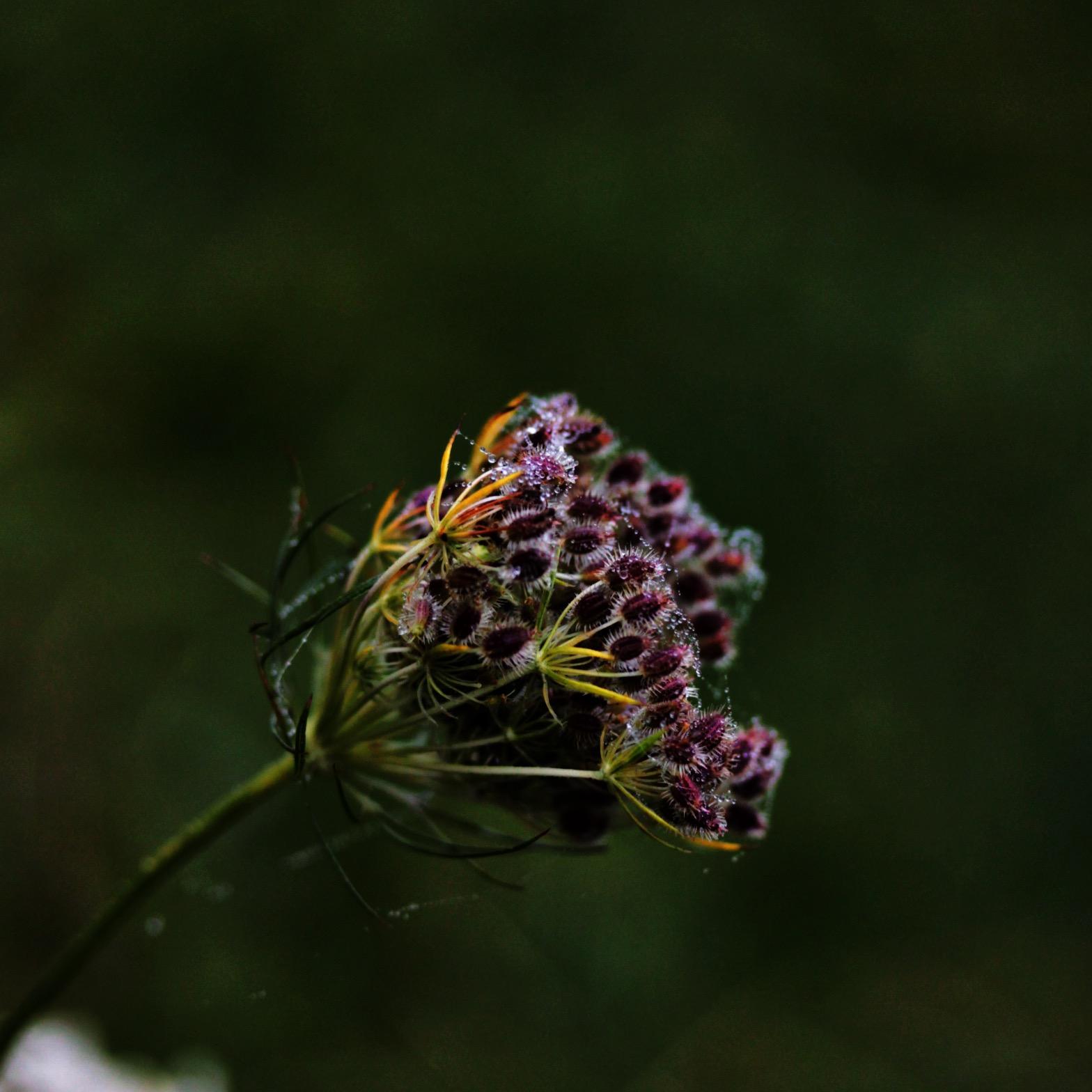 Wildflowers in their winter's slumber.