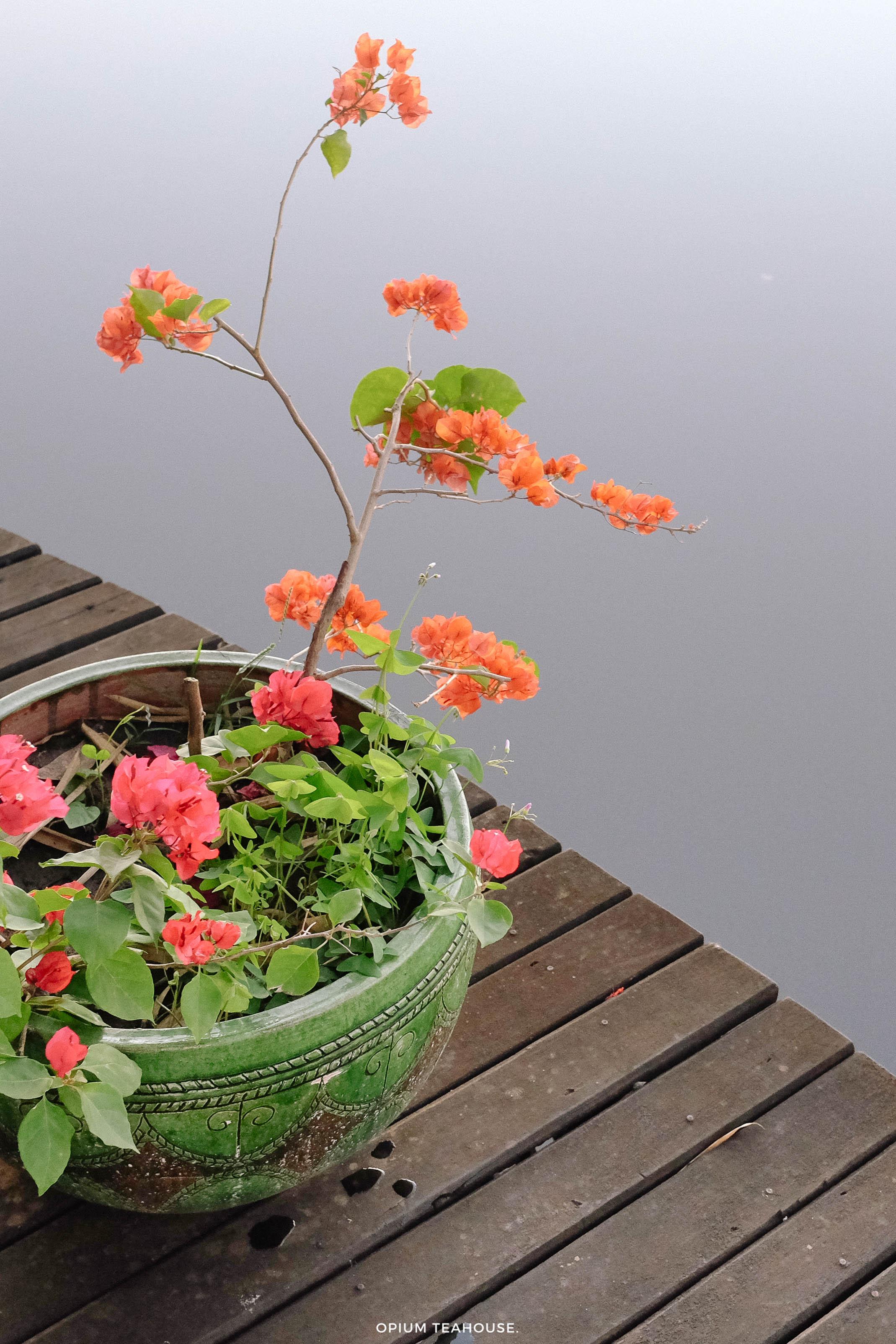 Inle Lake Princess flowers — OTH.jpg