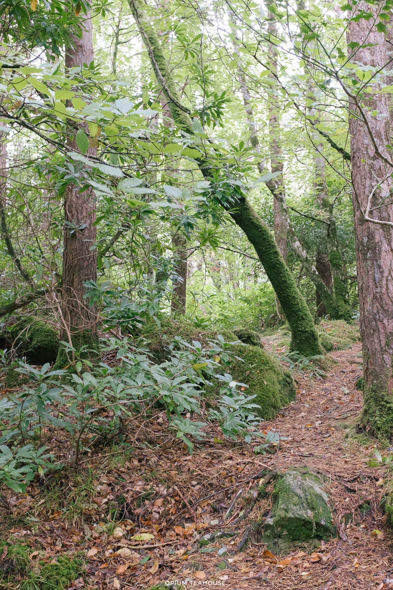 OTH_Ring of Beara Glengarriff Woods.jpg