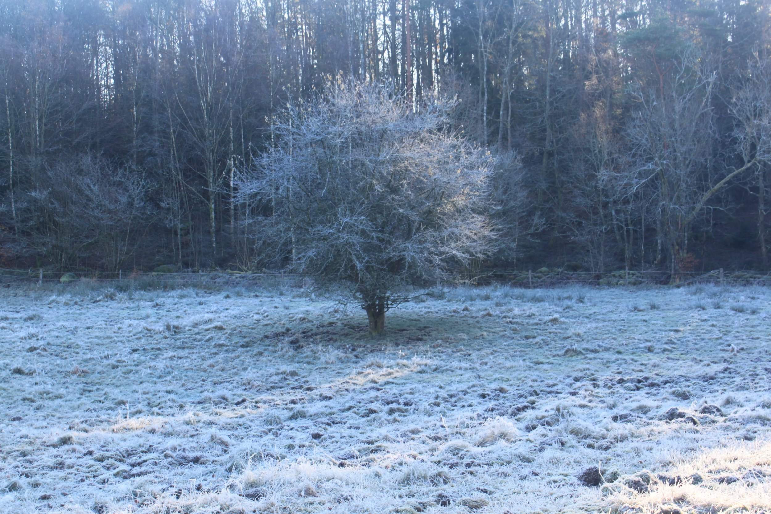 When I was little, my grandma had a picture of a tree in four seasons. 1/4 of its branches showed summer leaves, 1/4 spring flowers, 1/4 fall color and the other was bare with a coating of frost. The frosty one was her favorite.