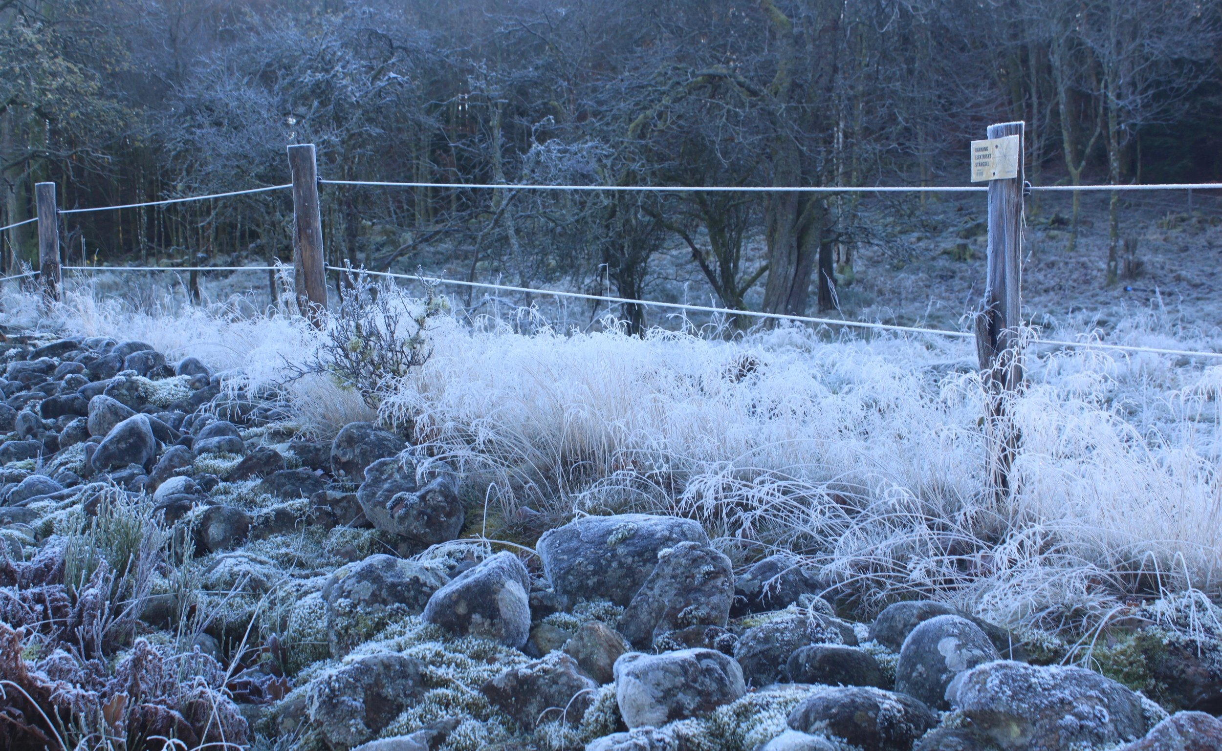 Frost everywhere, even the wispiest grass and heaviest rocks.